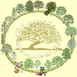 Horóscopo Celta – O Horóscopo das Árvores | Bruxaria Natural